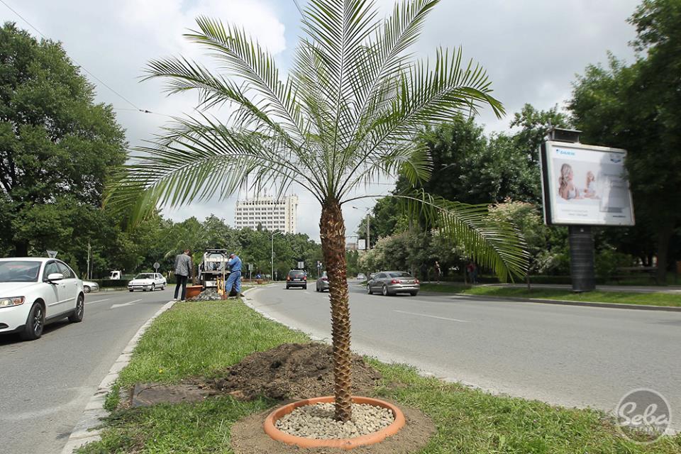palmierul de plastic