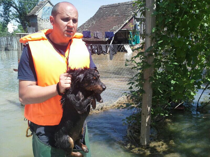 Salvare animale 2