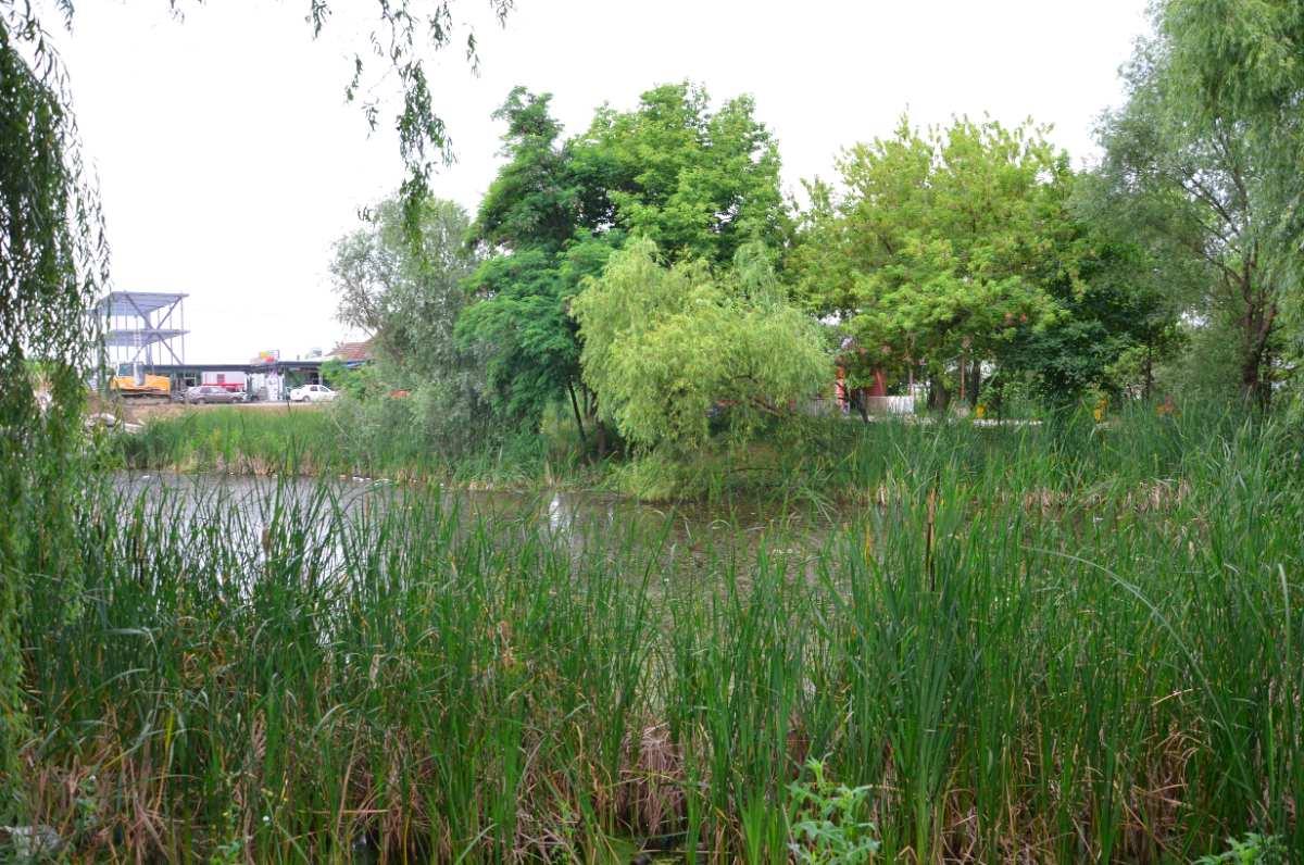 lacului (13)