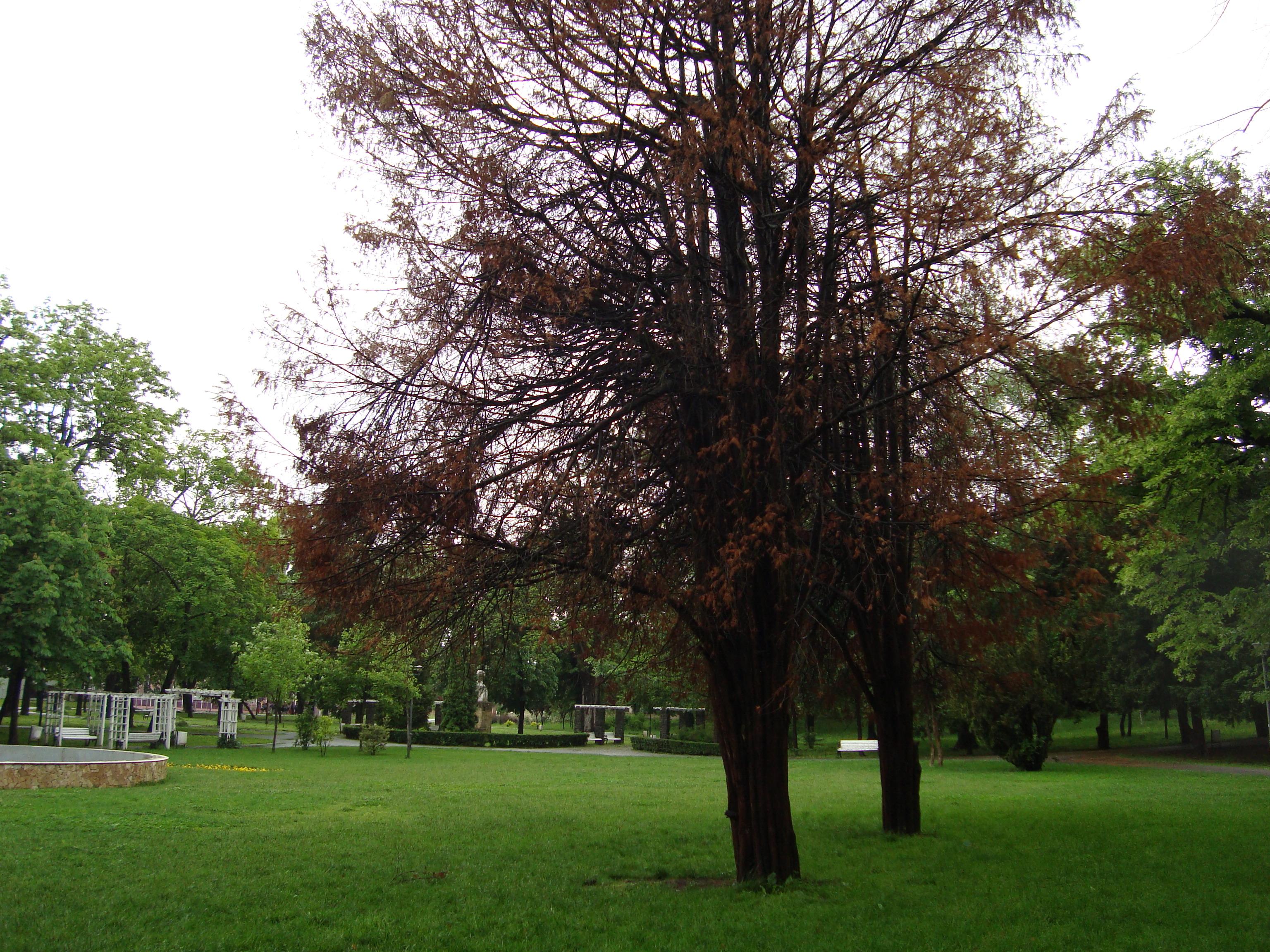 Pregătiţi-vă de noi parcuri în Timişoara, realizate de primărie pe terenuri expropiate din zona privată
