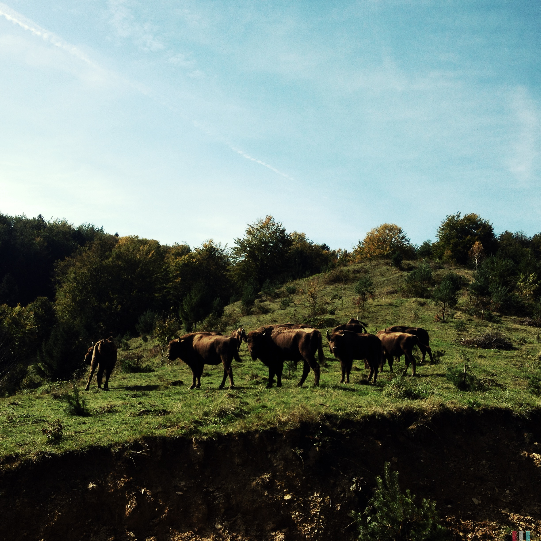zimbri_30.09 © Oana Mondoc