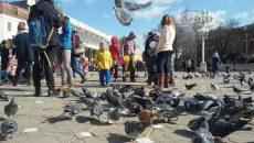 la porumbei