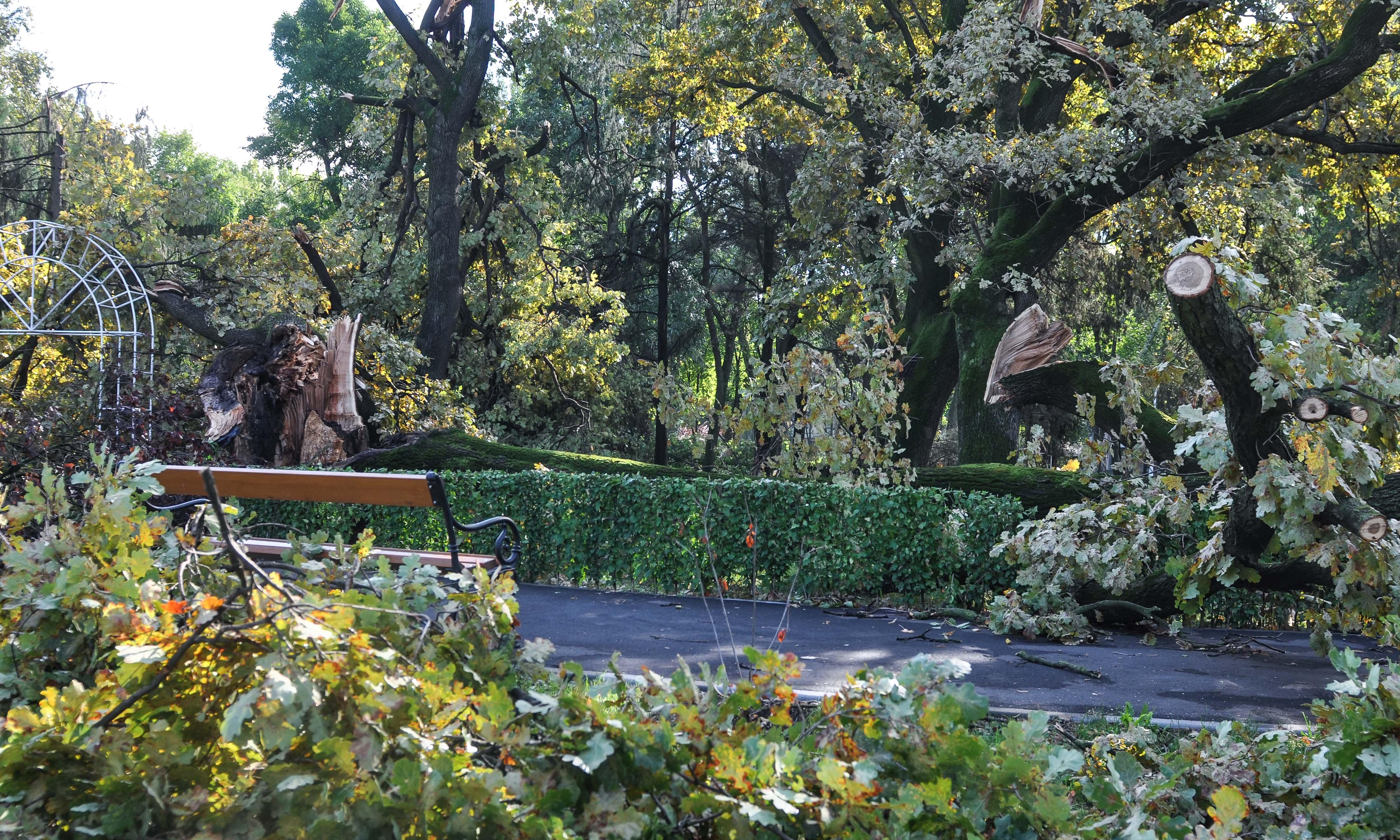 Efectele furtunii în Timiș: copaci rupți, incendii și inundații. Sute de persoane au rămas fără curent