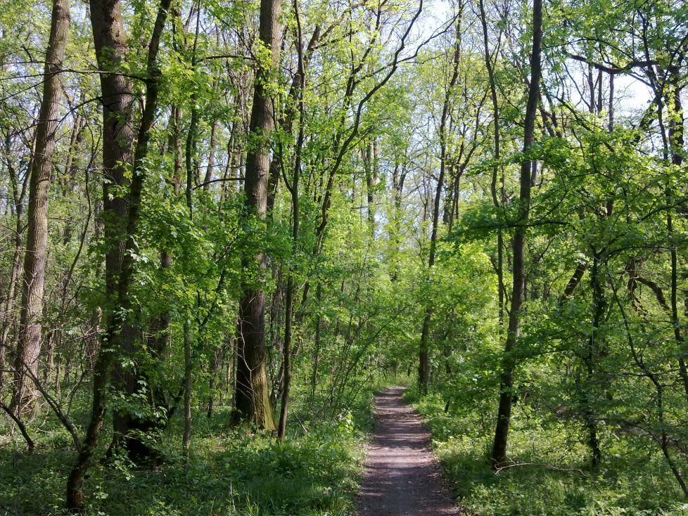 Pădurea Verde Timișoara