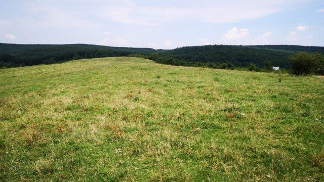 împădurire Cralovăț