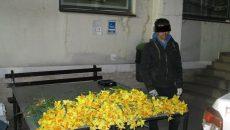 Sute de narcise au fost smulse din Parcul Justiției