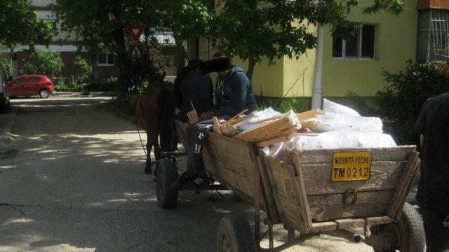 Căruțe în Timișoara