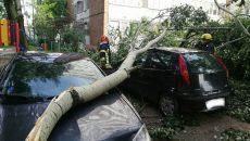 Mașini distruse de arborii căzuți în urma furtunii, la Timișoara