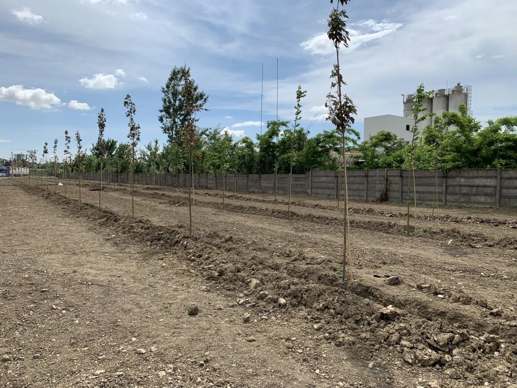Pădurea din zona Lipovei care va ajunge la maturitate în cinci ani