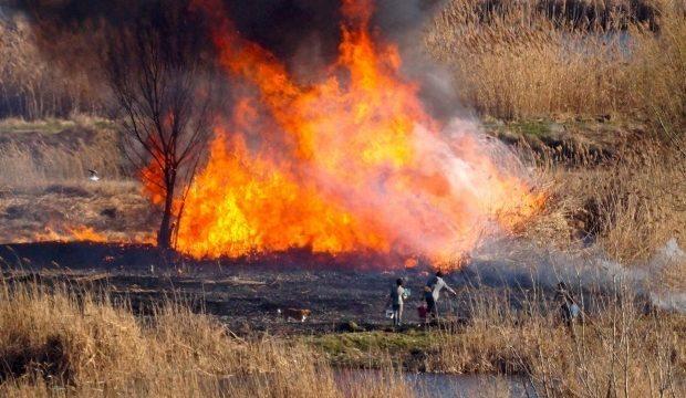 Incendiu de vegetație în Timiș