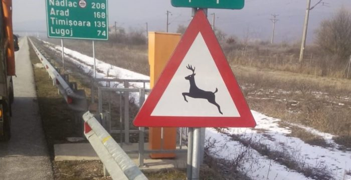 animale autostrada