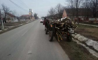 lemne taiate ilegal