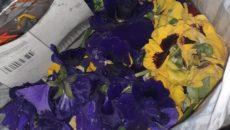 flori pod Michelangelo