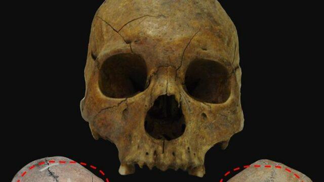 cranii muzeu