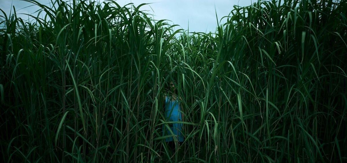 În iarba înaltă (In the Tall Grass)