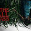 În iarba înaltă